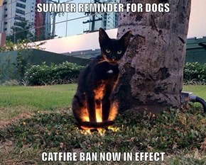 SUMMER REMINDER FOR DOGS  CATFIRE BAN NOW IN EFFECT