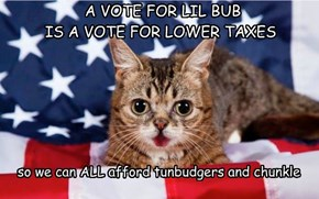 A VOTE FOR LIL BUB IS A VOTE FOR LOWER TAXES