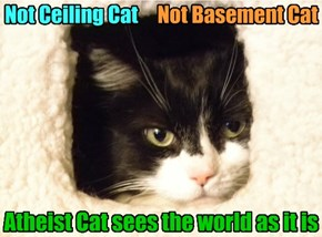 Atheist Cat sees the world as it is