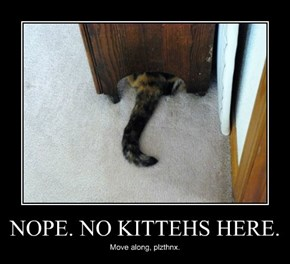 NOPE. NO KITTEHS HERE.