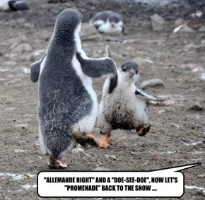 """""""ALLEMANDE RIGHT"""" AND A """"DOE-SEE-DOE"""", NOW LET'S """"PROMENADE"""" BACK TO THE SNOW ...."""