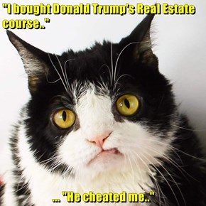 """""""I bought Donald Trump's Real Estate course..""""  ... """"He cheated me.."""""""