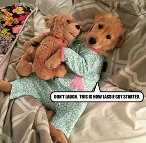 DON'T LAUGH.  THIS IS HOW LASSIE GOT STARTED.