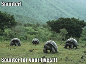 Saunter!  Saunter for your lives!!!