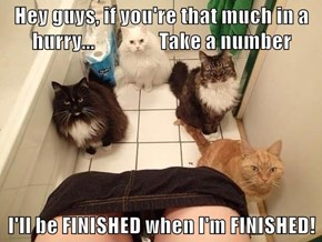 I Wish I Had NEVER My Cats How To Use The Toilet!