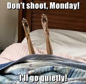 Don't shoot, Monday!  I'll go quietly!