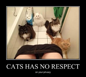 CATS HAS NO RESPECT