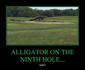 ALLIGATOR ON THE NINTH HOLE...