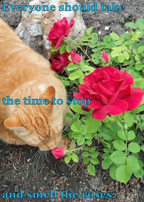Everyone should take  the time to stop and smell the roses.