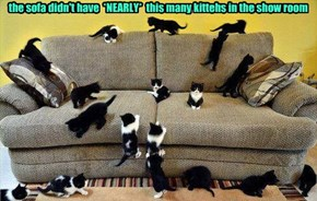 the sofa didn't have  *NEARLY*  this many kittehs in the show room