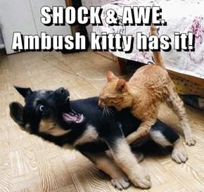 SHOCK & AWE. Ambush kitty has it!