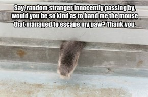 Say, random stranger innocently passing by, would you be so kind as to hand me the mouse that managed to escape my paw? Thank you.