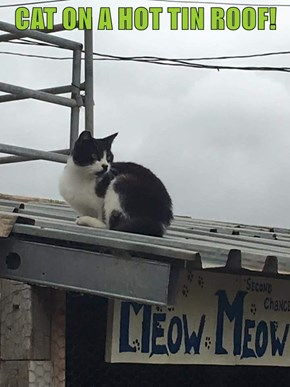 CAT ON A HOT TIN ROOF!