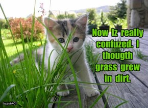 Now  Iz  really  confuzed.  I  thougth   grass  grew  in  dirt.