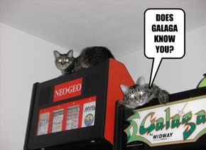 DOES GALAGA KNOW YOU?