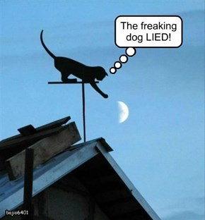 The freaking dog LIED!