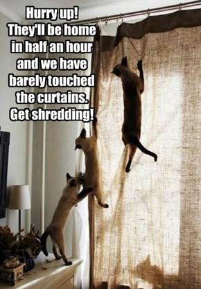 Hurry up! Cat stuff needs doing!
