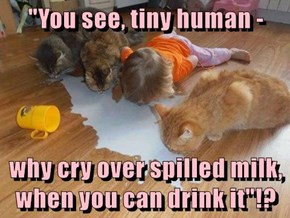 """""""You see, tiny human -  why cry over spilled milk, when you can drink it""""!?"""