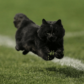This Cat Interrupted a Rugby Game and Gave the Internet a Photo That Was Worth Shopping