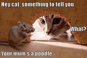Hey cat, something to tell you What? Your mum's a poodle