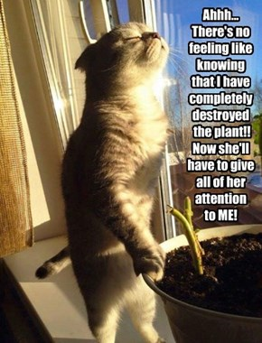 Ahhh... There's no feeling like knowing  that I have completely destroyed  the plant!!   Now she'll  have to give  all of her attention  to ME!