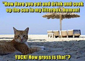 """""""How dare you eat and drink and soak up the sun in my litterbox, human!  YUCK! How gross is that""""?"""