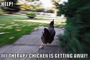 HELP!  MY THERAPY CHICKEN IS GETTING AWAY!