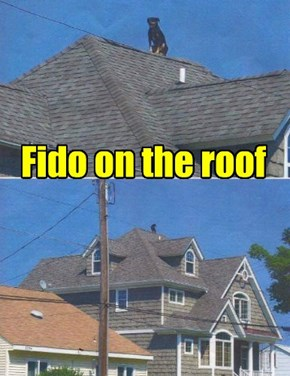 Fido on the roof