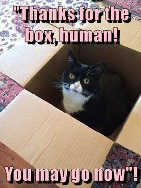 """Thanks for the box, human!  You may go now""!"