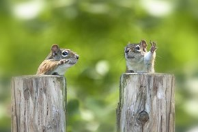 These Squirrels Look Like They're Politicians Having a Debate