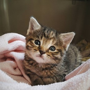 little miss Squishy (aka La Squishita), thinkin kitten thoughts