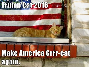 Trump Cat 2016  Make America Grrr-eat again.