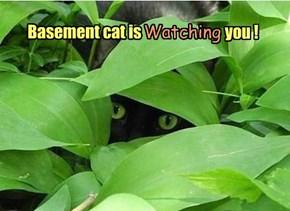 Basement cat is