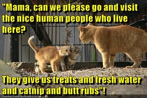 """""""Mama, can we please go and visit the nice human people who live here?  They give us treats and fresh water and catnip and butt rubs""""!"""