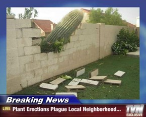 Breaking News - Plant Erections Plague Local Neighborhood...