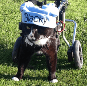 Blacky is Proof That Cats Really Do Have Nine Lives