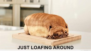 JUST LOAFING AROUND