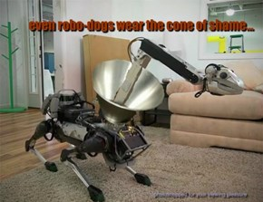 even robo-dogs wear the cone of shame...