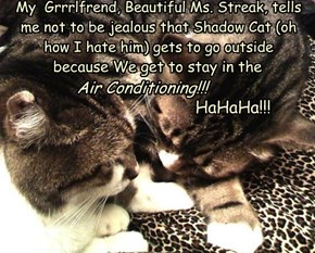 My  Grrrlfrend, Beautiful Ms. Streak, tells me not to be jealous that Shadow Cat (oh how I hate him) gets to go outside