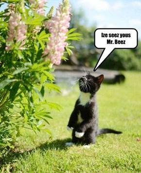 Ize seez yous Mr. Beez
