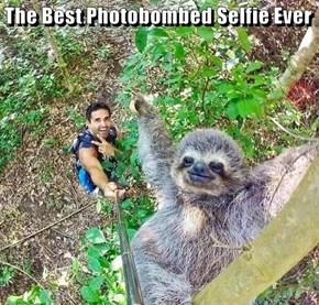 The Best Photobombed Selfie Ever