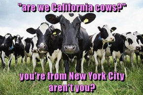 """""""are we California cows?""""  you're from New York City                     aren't you?"""