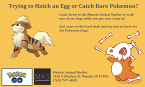 An Animal Shelter in Muncie, Indiana Wants Pokémon Go Players to Become Dog Walkers