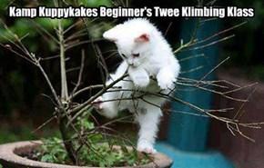 Kamp Kuppykakes Beginner's Twee Klimbing Kourse
