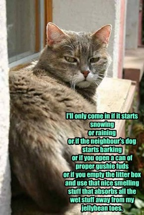 or if you empty the litter box and use that nice smelling stuff that absorbs all the wet stuff away from my jellybean toes.