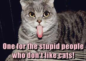 One for the stupid people who don't like cats!