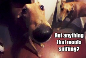 Got anything that needs sniffing?