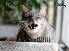 Huh,       huh,        huh,  hairball!!!!!