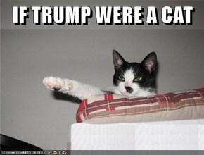 IF TRUMP WERE A CAT