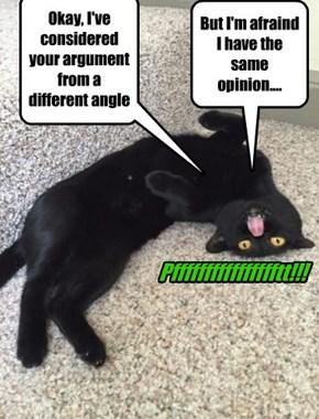 Basement Cat is unwavering